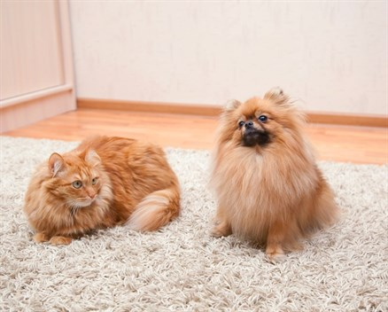 Drag pet hair out of your carpets with a squeegee