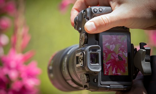 Canon EOS RP taking a close-up of some flowers